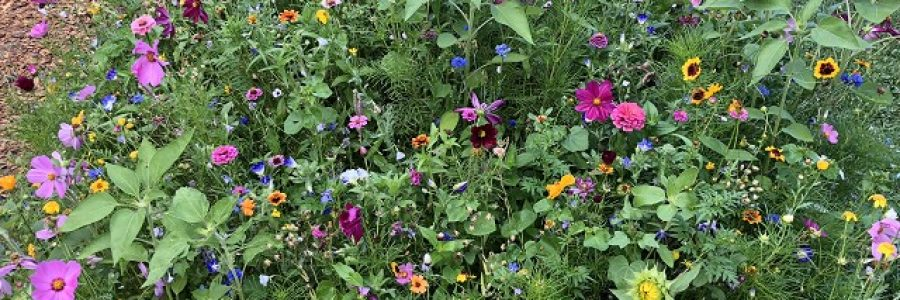 Blumenhügel_(640_x_480)